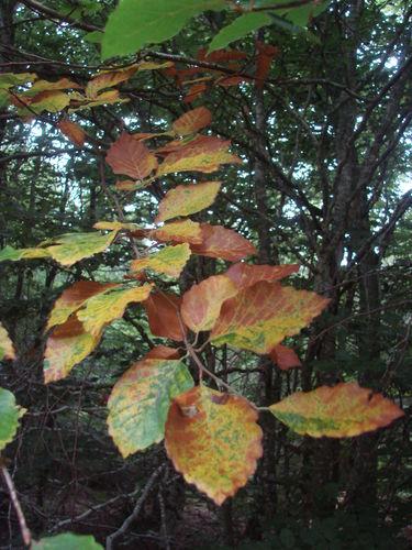 2008 09 06 Sa sent l'automne