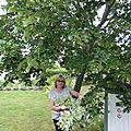 J'ai un <b>tilleul</b> dans mon jardin et j'essaie de ne pas louper tous les ans la récolte qui est très courte...