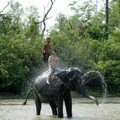 The bath of the elephants