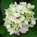 Fleurs de Leon 24061613