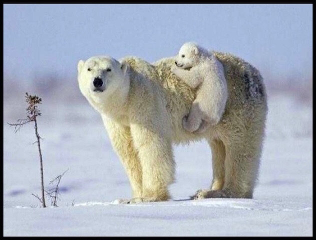 ours blanc tendresse 2