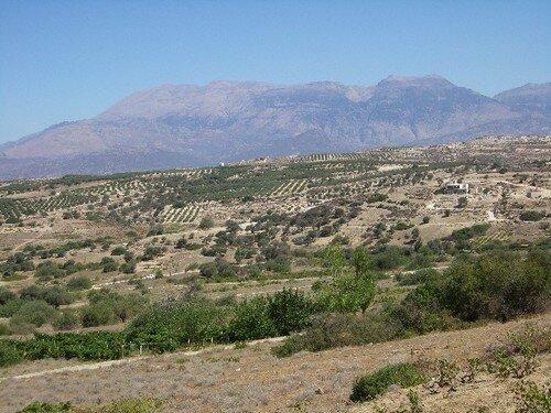route Héraklion - Matala... des oliviers