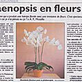 *****le phalaenopsis en fleurs******