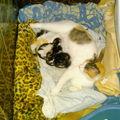 Hermine récupérée avec ses bébés dans une prairie