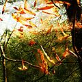 album 02 : nature et paysages