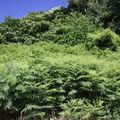 2009 06 21 Fougères et ciel bleu à Roumezoux