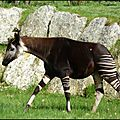 Au <b>zoo</b> de <b>Beauval</b> (1)