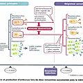 TS, Chapitre 3: le phénotype immunitaire