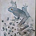Lavis encre grenouille