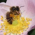 Un <b>toit</b> pour les <b>abeilles</b>...