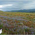 ♥ La ronde fleurie de l'été ; coquelicot, marguerite et <b>bleuet</b> ♥
