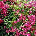 Fleurs de Leon 24061633