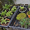 Plantes d'