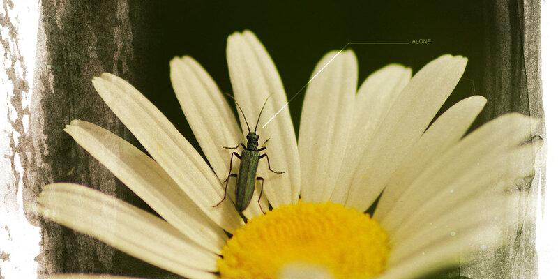 20180510 Insecte B
