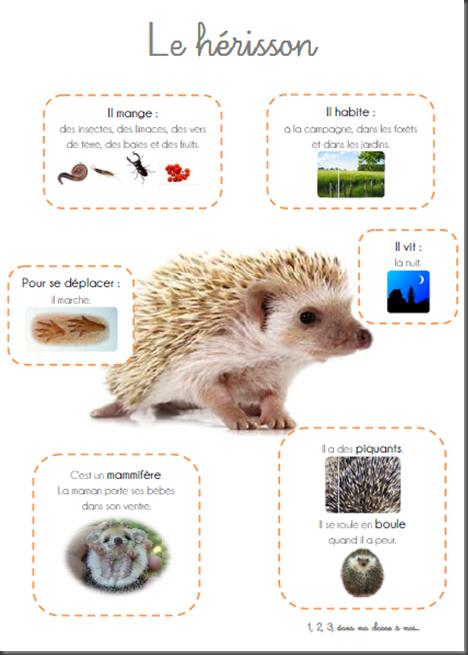 Windows-Live-Writer/Une-squence-Le-Nol-du-hrisson_E182/image_thumb_6