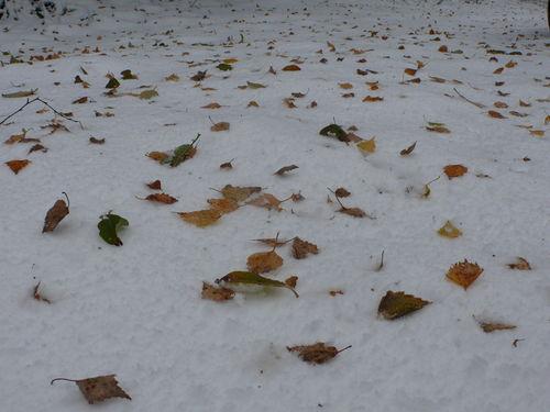 2008 10 30 De la neige et des feuilles