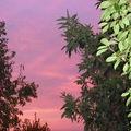 Ciel rose sur la ville rose