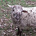 Mouton Paris
