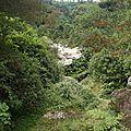 La Réunion, paradis des champignons ?