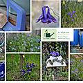 le mois de janvier en couleurs-n°4-le bleu dans tous ses états