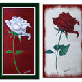 Rose blanche, rose rouge