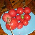 Les tomates de la cour (2)