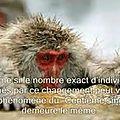 Tout est relié... la noosphère ou le 100ème singe