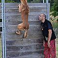 la passion du chien