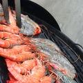 Crevettes à la plancha sur bbq, sauce-aigre douce antillaise