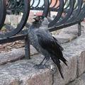 Oiseaux - Ptak