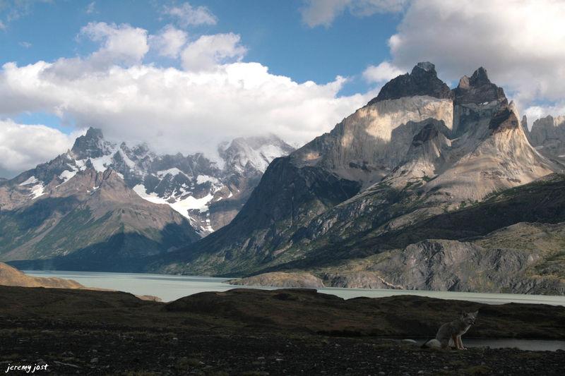 Renard face aux Cuernos del Paine