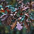 Couleurs d'automne * Autumn colors #4