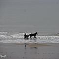 Thalassothérapie pour chevaux...
