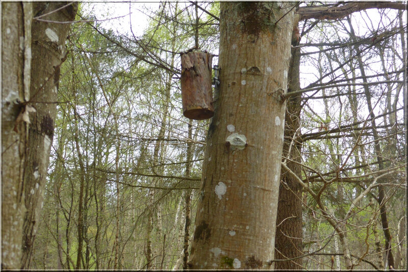 Geocaching foret d'Orleans (7)