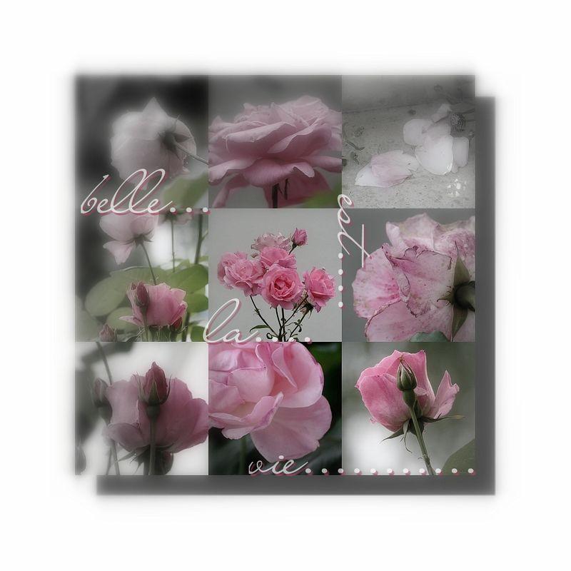 rose....