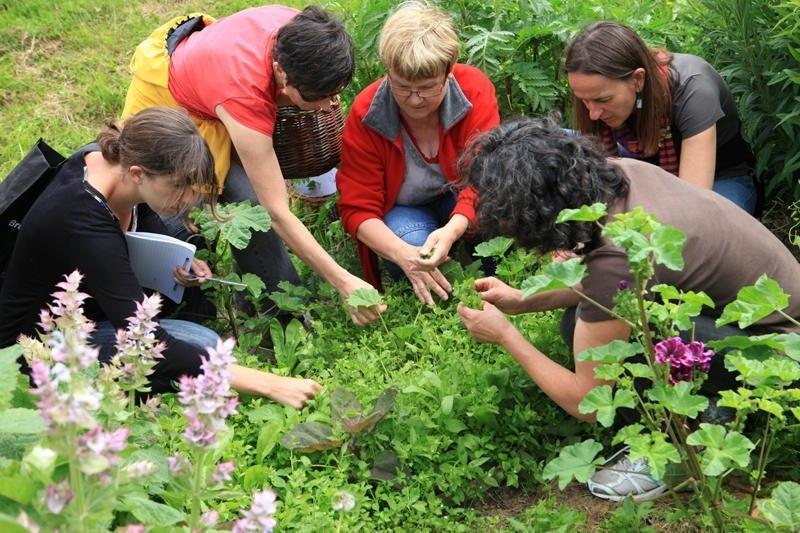plantes-sauvages-medicinales-comestibles
