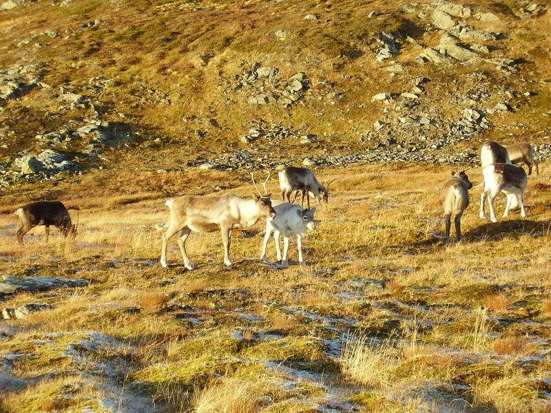 17-10-08 Sortie Montagne et rennes (122)