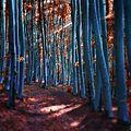 Forêts enchantées de janek sedlar