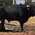 Les 5 toros de l'encerrona de <b>Medhi</b> <b>Savalli</b>.