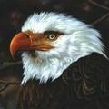 <b>MOGWAI</b> - the Hawk Is Howling