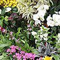 Le jardin des papillons 3