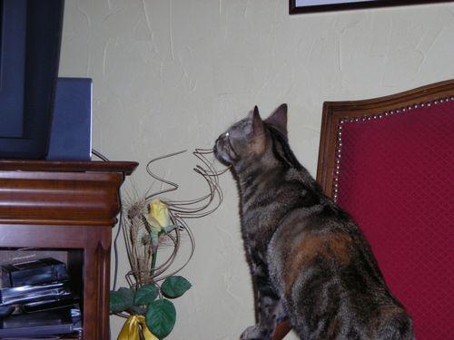 plume Pâques2009 008