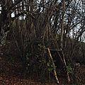 Ma <b>cabane</b> au fond du <b>jardin</b>.
