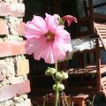 08-fleur