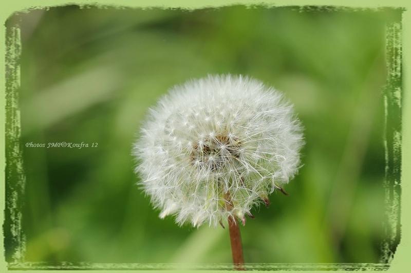 Photos JMP©Koufra 12 - Fleurs La Cavalerie - 18052018 - 012