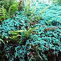 Les <b>fougères</b> et les orties comme insecticides contre les pucerons et cicadelles, sans nuire aux abeilles