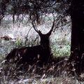 nakuru impala a