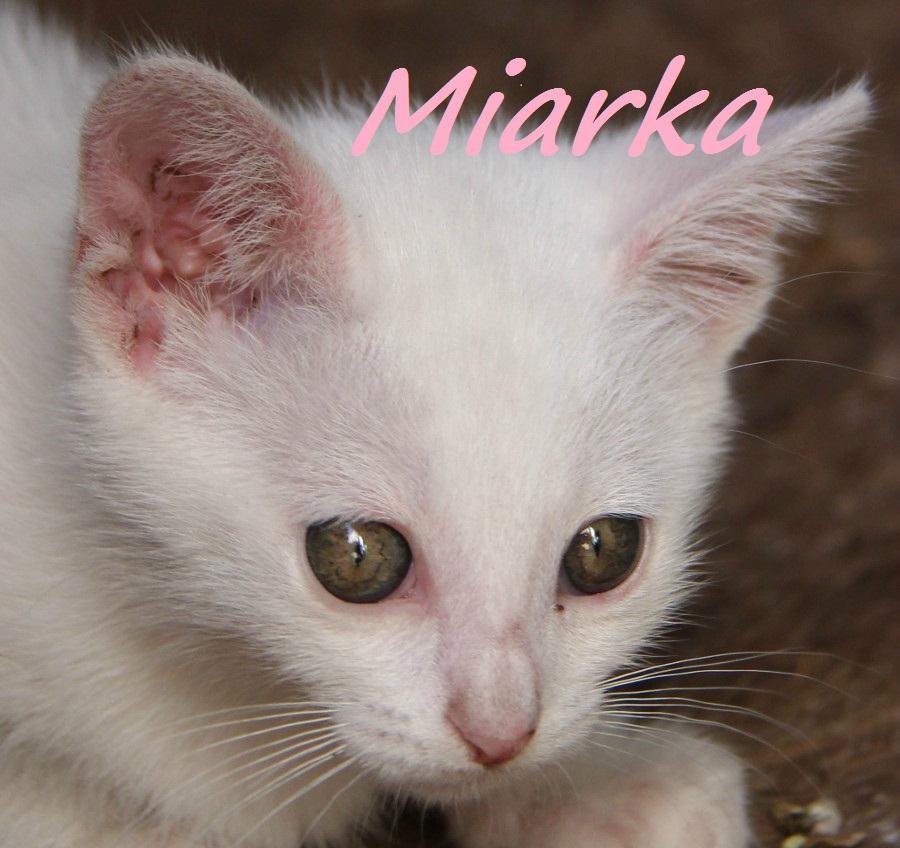 Miarka, monaco et Mara