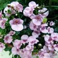 Juin en fleurs