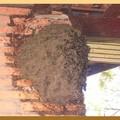 nid de guêpe sur un mur